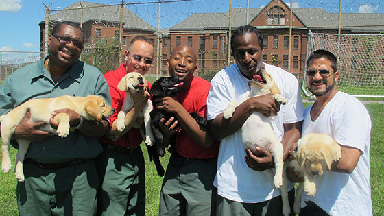 Image from JAYU: Prison Dogs