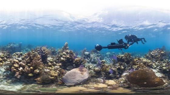 Chasing_Coral_4.jpg
