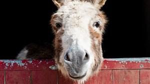 Do_Donkeys_act_1_thumb.jpg